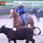 Riders Take the Heat at WVRA Team Penning Event