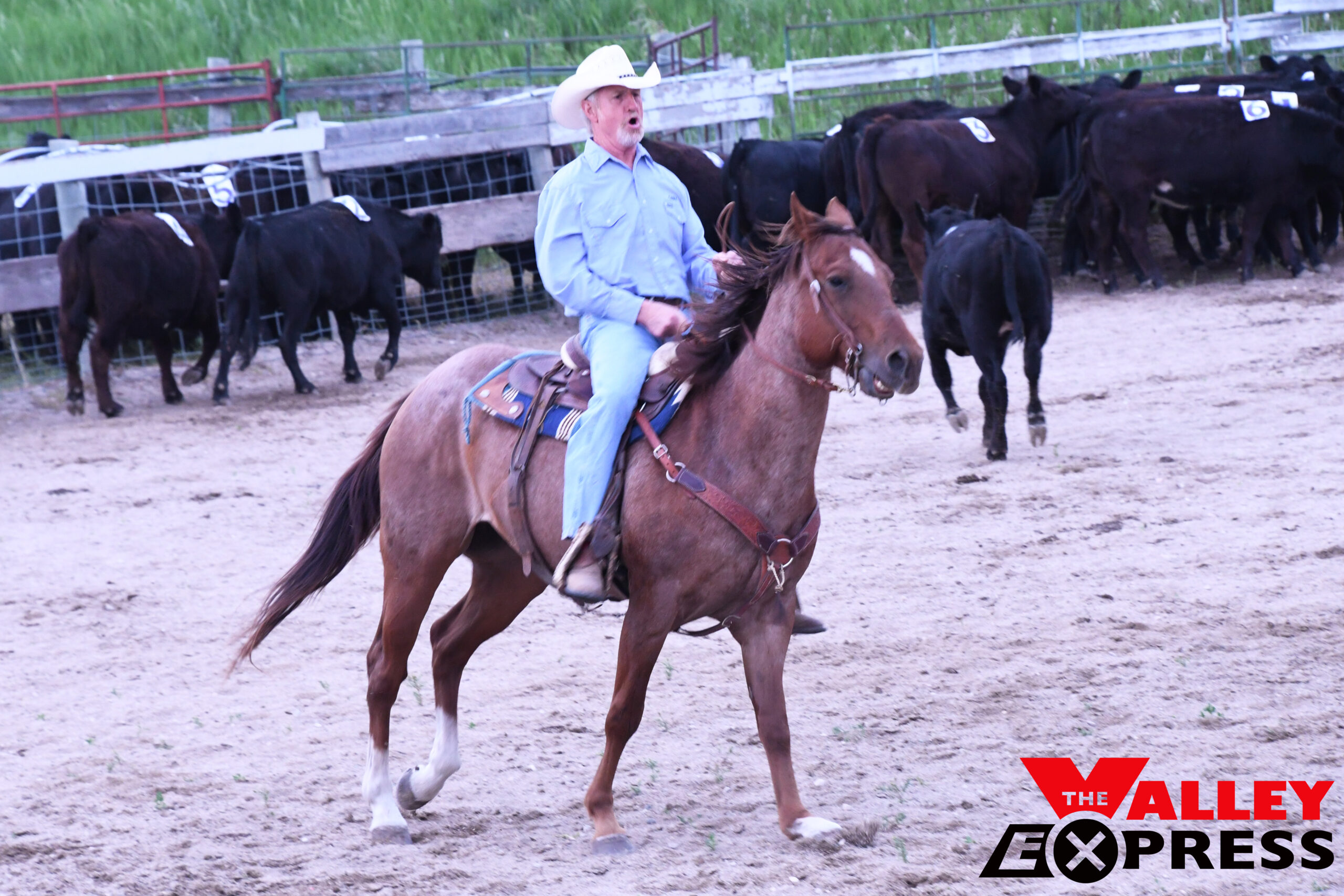 Mead, Graham, and Schuchard Win Team Penning Event